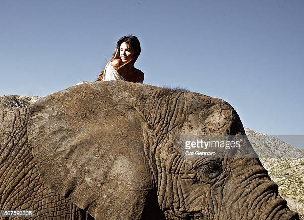 riding elephant to new hope - hope imagens e fotografias de stock