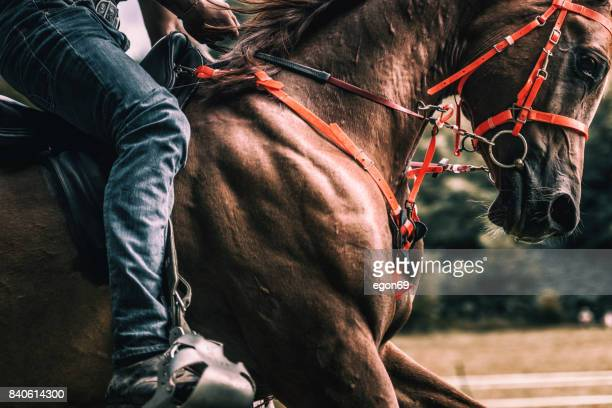 riding horse - dressage stock pictures, royalty-free photos & images