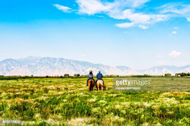 riding horses in open pasture. - utah stock photos and pictures