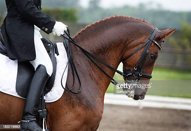 riding in the rain - dressage stock pictures, royalty-free photos & images