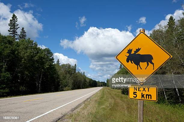 riding mountain national park - manitoba stock pictures, royalty-free photos & images