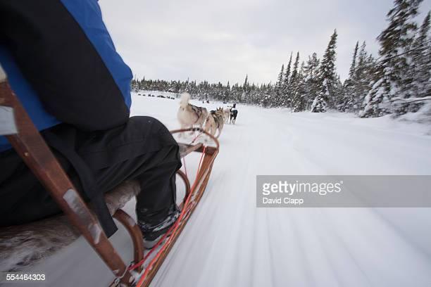 Riding on a dog sled, Kiruna, Sweden