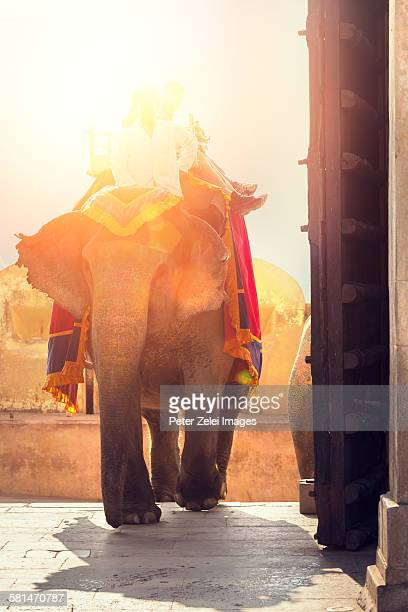 Riding on elephant in India