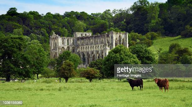 Rievaulx Abbey, North Yorkshire, 2006. General view of the abbey church with cattle looking towards the camera. Originally founded in 1132, Rievaulx...