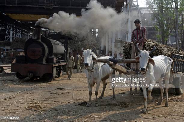 Riga Sugar Mill in Bihar with their Hudswell Clarke 080ST No 1644 of 1930 19th March 2007