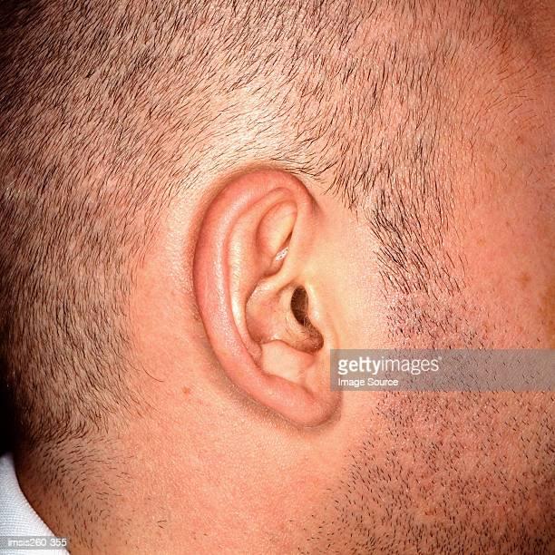 Right ear of Caucasian male