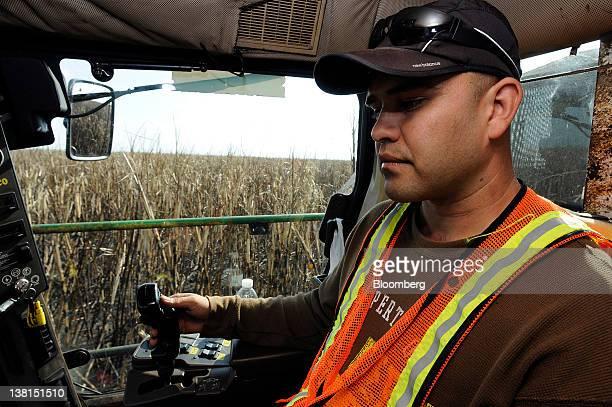 Rigoberto Prieto drives a sugar cane harvester at a US Sugar Corp farm in Clewiston Florida US on Wednesday Feb 1 2012 Global sugar supply will match...
