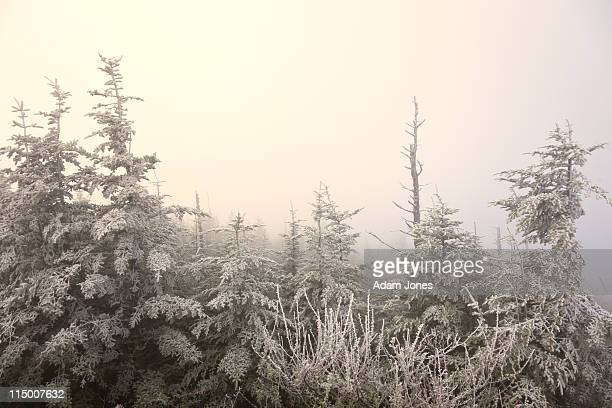 rim ice and fog, clingman's dome - clingman's dome fotografías e imágenes de stock