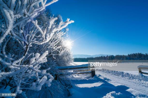 rime on trees, clear blue sky with star shaped sun in winter landscape with snow