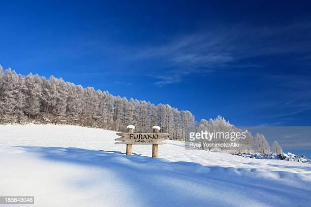 Rimed forest in Furano, Hokkaido