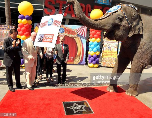 Ringling Bros elephant Kellyann attends the Circus Founder PT Barnum's Star Dedication Ceremony at Nokia Plaza LA LIVE on July 15 2010 in Los Angeles...