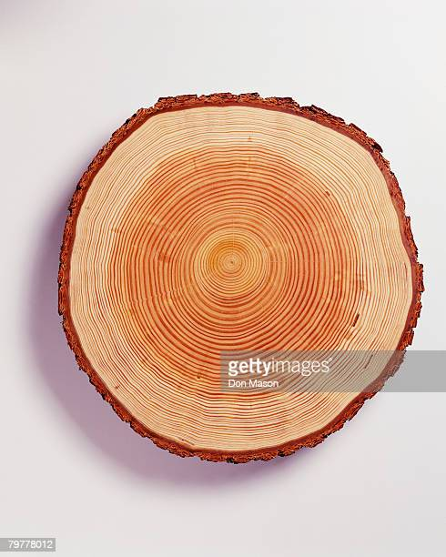 Rings of Douglas Fir Tree