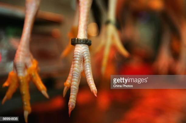 Rings showing the production location are afixed to chicken feet at a market March 3 2006 in Guangzhou of Guangdong Province southern China China has...