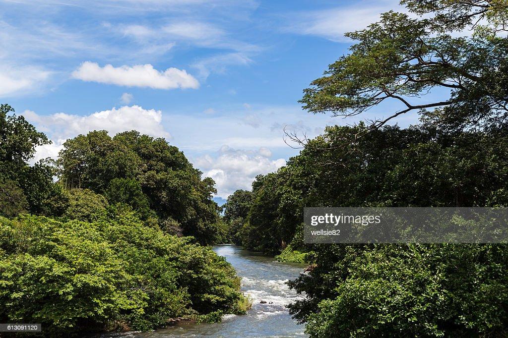 Rio Corobici : Foto de stock