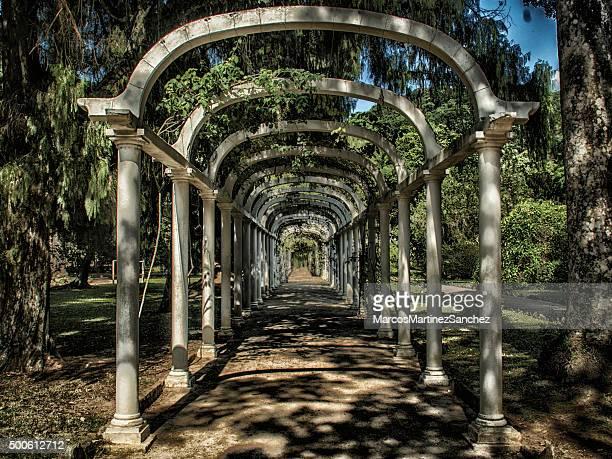 rio de janeiro, ´ s botanic garden- eco túnel - jardim botânico - fotografias e filmes do acervo