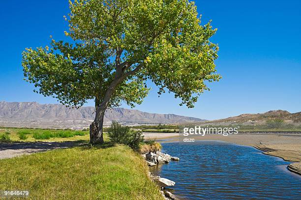 Rio Grande River and cottonwood tree in El Paso Texas