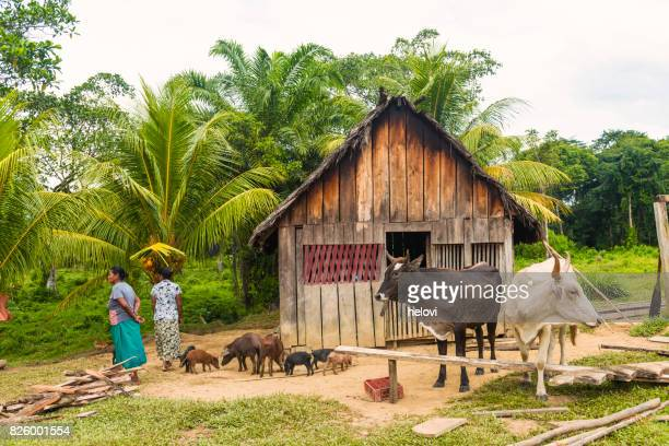 rio platano reserve - honduras stock pictures, royalty-free photos & images