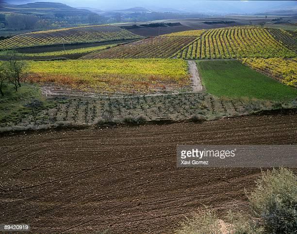 Rioja Alta Vineyards