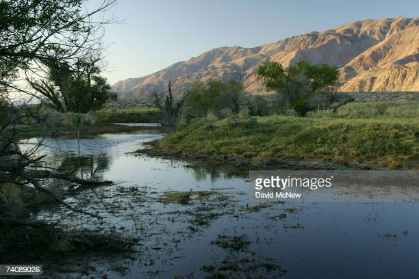 Riparian or streamside habitat along the lower Owens River before it empties into Owens Lake is expected to increase as the river flow is increased...