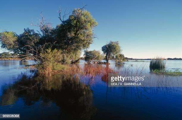 Riparian vegetation along the Zambezi River, Mosi-oa-Tunya National Park, Zambia.