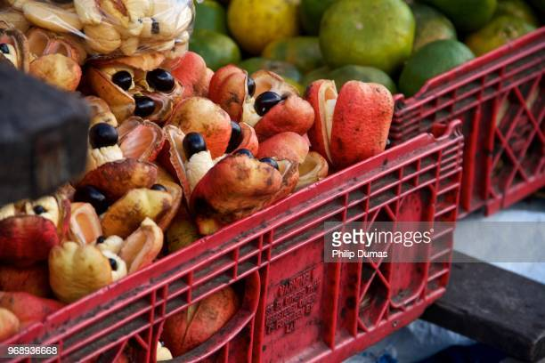 ripe ackees (blighia sapida) - jamaican culture stock pictures, royalty-free photos & images