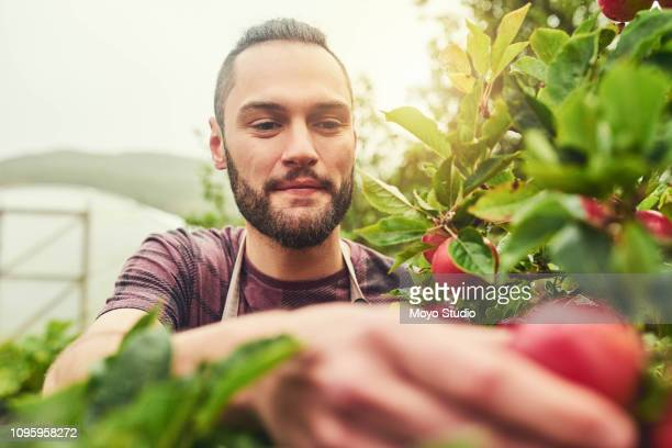 ripe and ready for picking - picking stock pictures, royalty-free photos & images