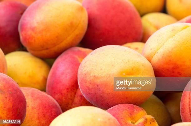 ripe apricots - mango stock-fotos und bilder
