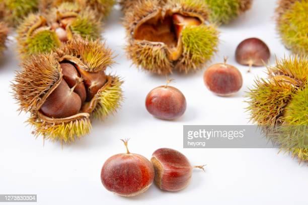 ripe chestnuts harvested in autumn - châtaigne photos et images de collection