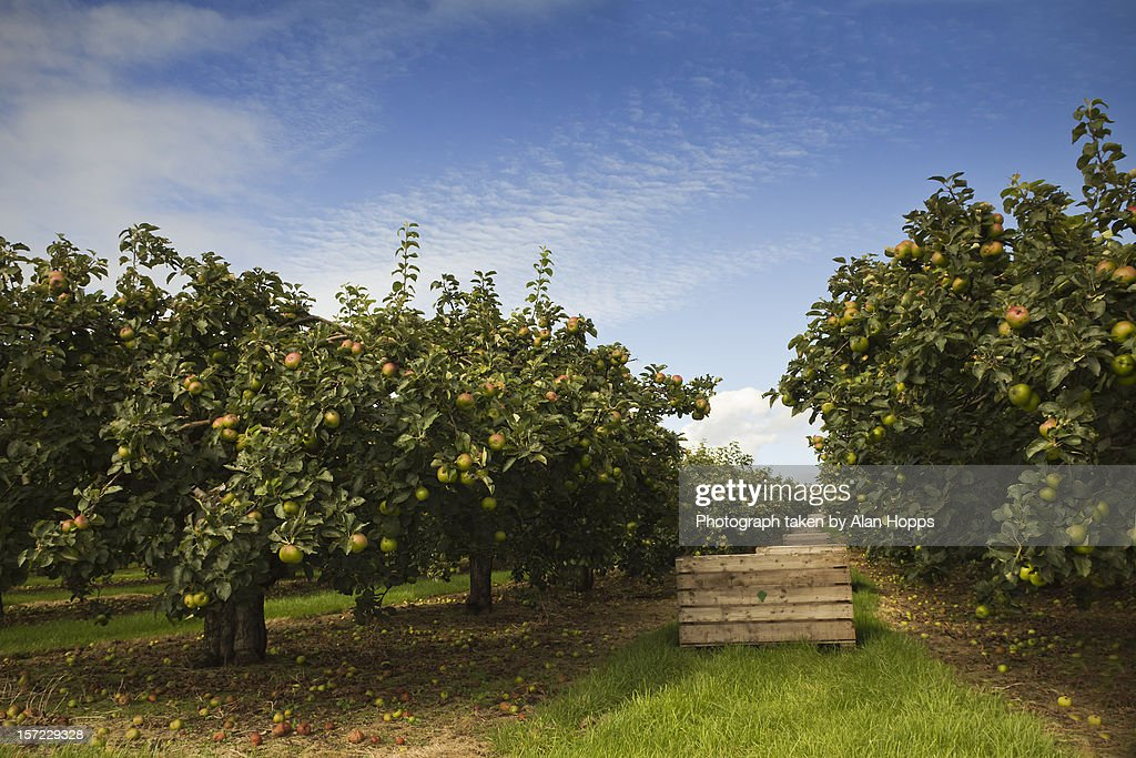 Ripe for picking : Stock Photo