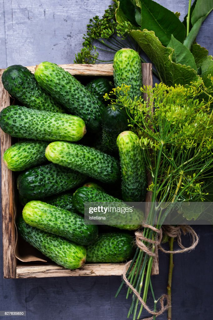 Ripe organic cucumbers : Stock Photo