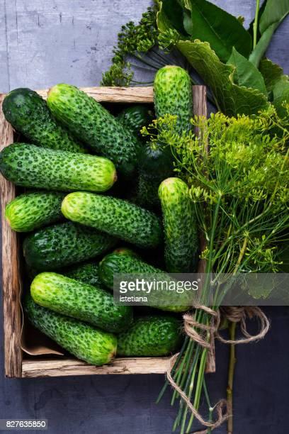 Ripe organic cucumbers