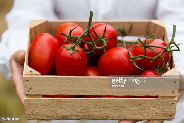 Ripe organic tomatoes in crate