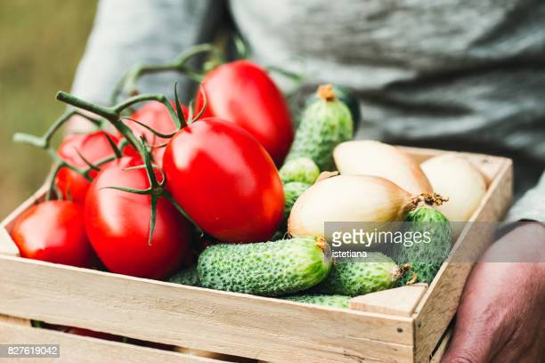 Ripe organic vegetables in wooden crate