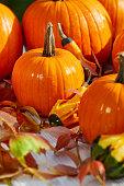 ripe pumpkin fruits lying wooden barrel