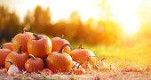 Ripe Pumpkins In Field At Sunset