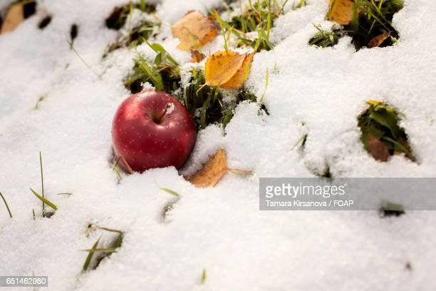 Ripe red apple in winter