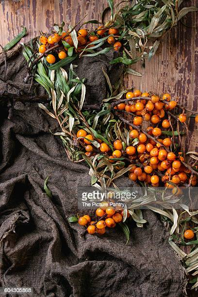Ripe sea buckthorn berries