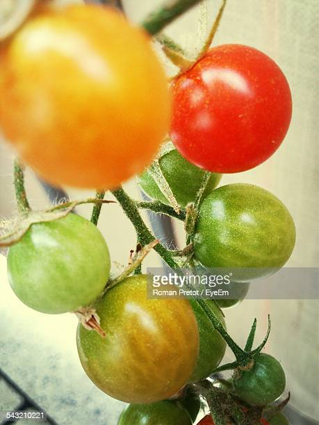 ripe tomatoes - roman pretot stock pictures, royalty-free photos & images