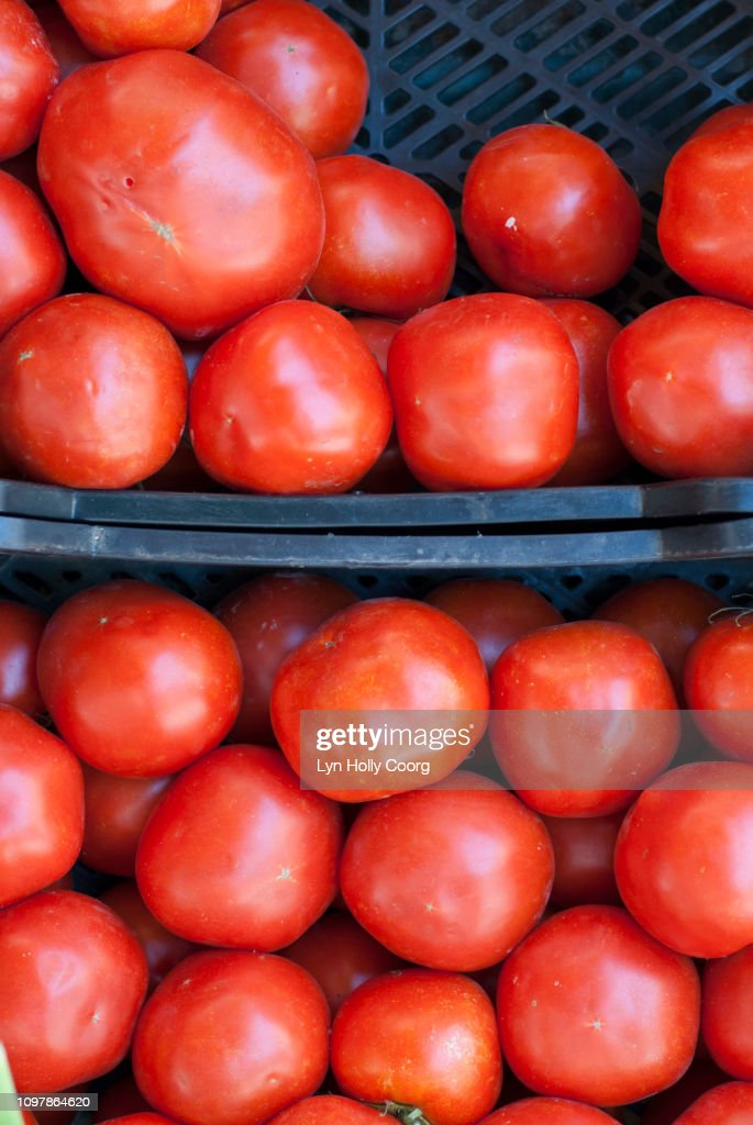 Ripe tomatoes ready for sale in boxes : Stock Photo