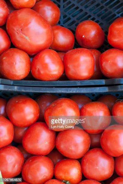 ripe tomatoes ready for sale in boxes - lyn holly coorg photos et images de collection