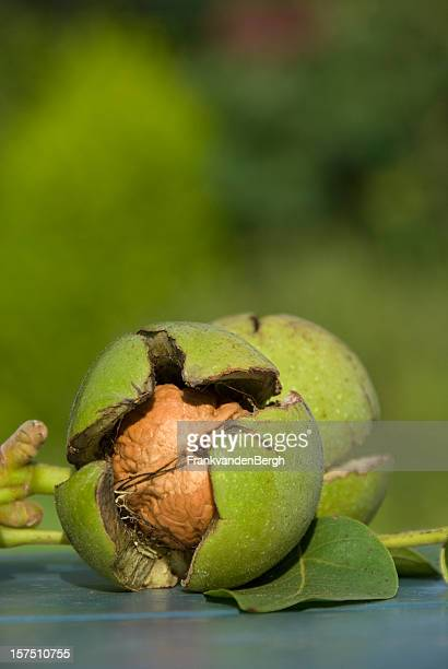 Mûres noix