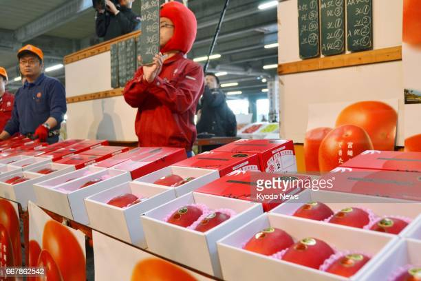 """Ripened mangoes labeled as """"Taiyo no Tamago"""" are auctioned at a wholesale market in Miyazaki, southwestern Japan, on April 13, 2017. A brand-name..."""