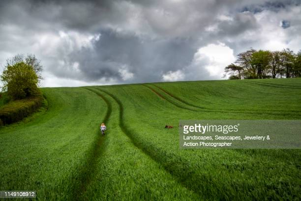ripening wheat and rain clouds - farm stock pictures, royalty-free photos & images