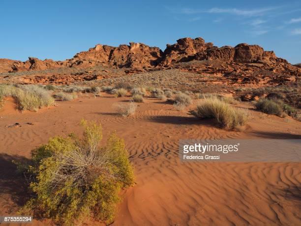 Ripples In The Sandy Desert Floor At Little Finland, Nevada