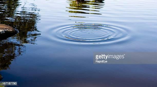 Ripples on a pond