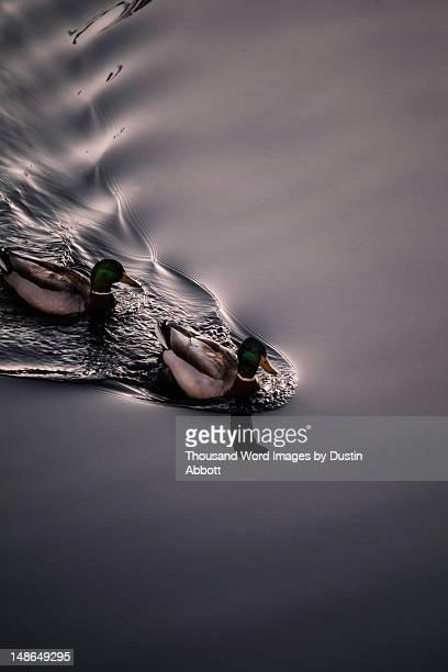 ripples - dustin abbott imagens e fotografias de stock