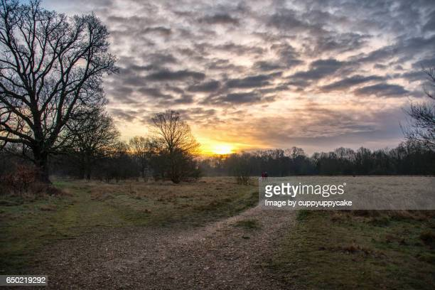 rise and shine - east london stock pictures, royalty-free photos & images