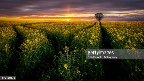 rise and shine - jutland stock photos and pictures