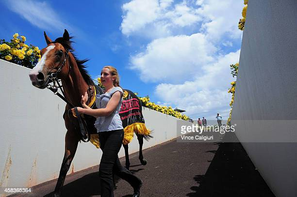 Risen from Doubt walks back to stables after winning Race 5 the Schweppes#FlemingtonFling on Melbourne Cup Day at Flemington Racecourse on November 4...