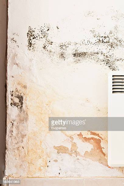 Rising Damp and Mildew or Mold on Wall behind Radiator
